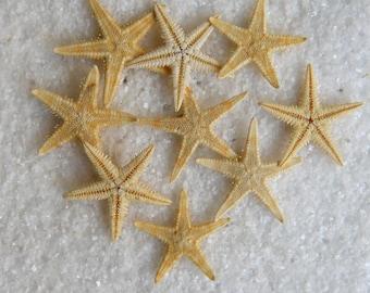 25 pack of Tiny Starfish