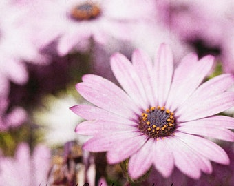 GET 20% OFF TODAY! Purple Daisy - Art Photography & Home Decor, Wall Art,  Nature, flowers, purple