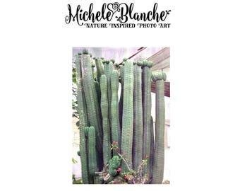 Colonne Cactus Photo d'Art, photographie de colonnes de cactus, plantes grasses Nature Photos, Dessert Nature impression ensemble, Sedum Art, Photo Art Print Set