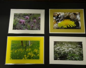 Set of 4 Original Nature Photos with Envelopes