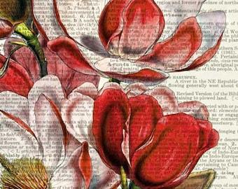 magnolia II dictionary page print