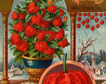 The Dingee Conrad Co. 02 Rose Growers Seed and Plant  Seed Company Bright Colorful Print  Vintage Reproduction Print 11 x17