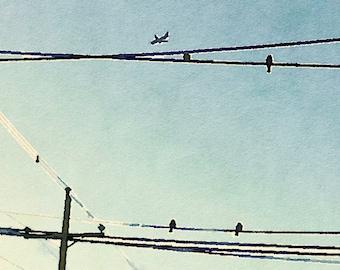 Birds digital watercolor