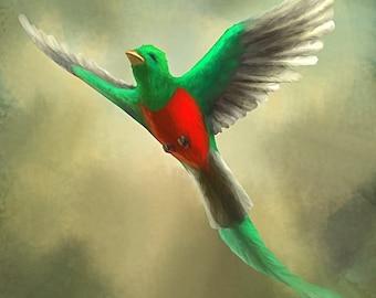 Resplendent Quetzal Postcard 130lb Card Stock