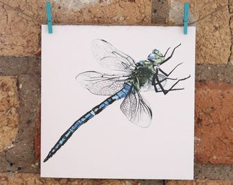 Illustrated Dragonfly Card