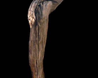 """Natural Driftwood Loire """"Minotaur"""" sculpture"""