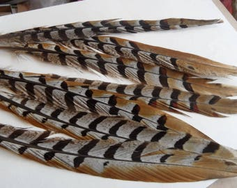feathers long (2) 25cms from a pheasant revered