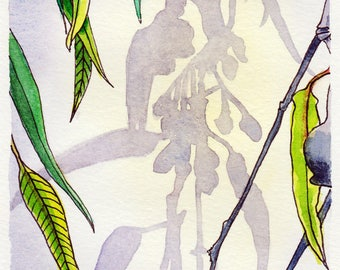 Australian Gum Nut Shadows - Original watercolour painting