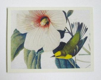 Découpage d'alimentation Paruline ailé bleu Vintage Image d'oiseau Audubon Destash d'alimentation artisanat approvisionnement découpage papier éphémères scrapbooking carterie