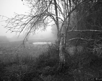 """Black and White Photography -  a tree and pond in winter fog, landscape photography, home decor, nature wall prints, tree photo - """"Sorrow"""""""