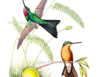 Flying Bird Wall Art Hummingbirds Bird Print no.5 Spring / Summer Home Decor Art Print.
