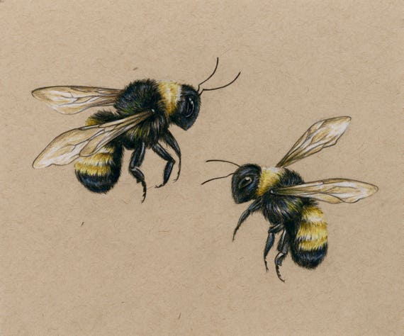 Bees art PRINT drawing colored pencil lover bees flying