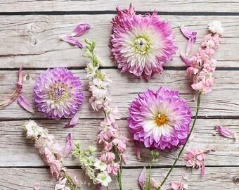 Dahlias and larkspur,shabby chic decor, Fine art print,pastel photograph,still life,feminine,pink,nature,flowers,square print