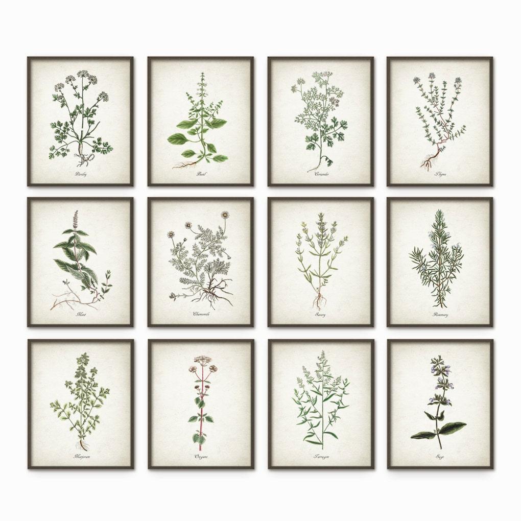 Kitchen Art Herbs: Kitchen Herbs Wall Art Print Set Of 12 Vintage Botanical