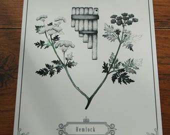 Hemlock Illustration~Giclee Print