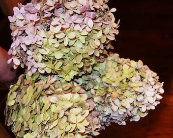 Dried hydrangeas,  Pink hydrangeas, Hydrangeas,  Pink and green hydrangeas,  Large bunch!!