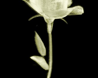 Crystal Rose Yellow Print, Rose, Crystal, Yellow, Rose Print, Rose Art, Flower Wall Print, Gift Print