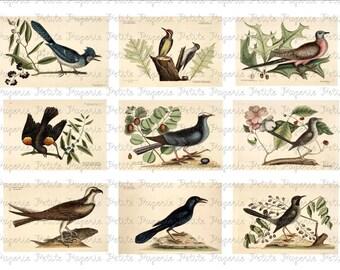 Vintage Birds Digital Collage A 3.5 x 2.25 Inch