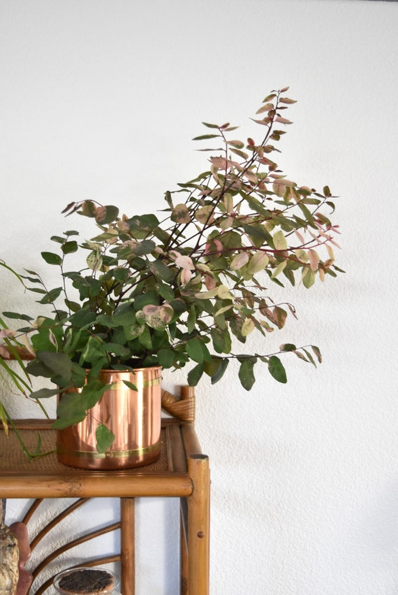 two toned copper brass cylinder planter / ice bucket