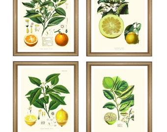 "Citrus Prints Set. Fruit Prints Set. Orange. Lemon. Lime. Grapefruit. Citrus Wall Art Set.   5x7"" 8x10"" 11x14"""