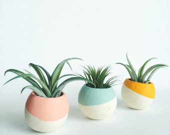 Paint Dipped Pod Air Plant Planters - Air Plant Included; Natural Pod Planter; Paint Dipped Planter; Home Decor; Desk Accessory; Office