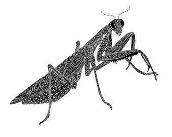 Praying Mantis Art - Wall Art - Art Print - Insect Art - creative drawing