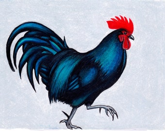 Bright rooster A5 Chickens, hen,