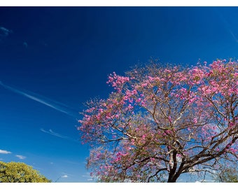 Tree with flowers