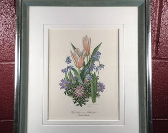 Miniature Bulbs Watercolor Flower Print by Anne Ophelia Dowden