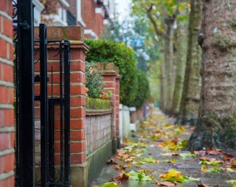 Autumn Photography - Fulham, London Print - Fall Leaves