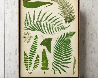 Botanical chart, Fern print, fern poster, botanical print, fern chart study poster, fern art, botanical poster, green herbs poster