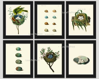 Bird Nest Egg Print SET of 6 Art Print  Antique Birds Nests Eggs Shell Flowers Plate Illustration Room Wall Home Interior Decor to Frame