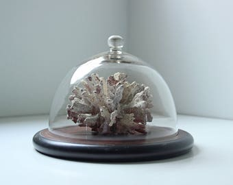 Vintage cloche / cheese cake dome with wood stand