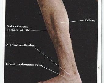 Vintage Anatomical Photo Print Bookmark - Legs and Feet