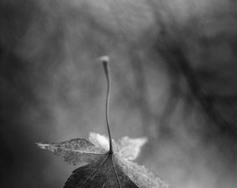 """black and white photography, falling leaf, autumn, fall time, change, monochromatic wall art - 16x24, 11x16 or 8x12 photograph, """"Free Fall"""""""