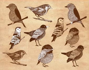 Woodland Birds clip art. Clipart digital download. Brown hand drawn graphics. Forest bird.