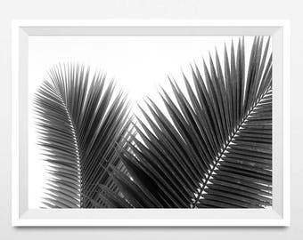 Palm Tree Leaves Print, Scandinavian Printable Art, Minimalist, Black and White Photography, Large Tropical Leaf Wall Art, Instant Download