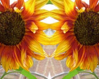 Sissinghurst Sunflowers