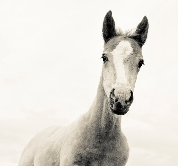 HANDSOME. horse print, animal picture, photographic print, limited edition, equine print