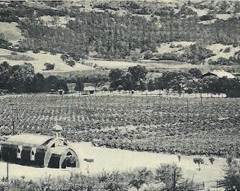 Vintage 1930's Asti California Postcard Wine Barrel Church