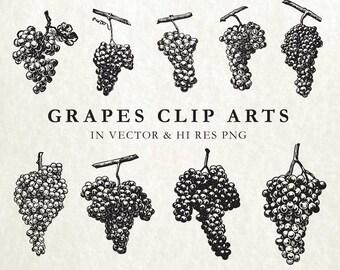 Grape Clipart, Grape Vine Clipart, Wine Clipart, Rustic Clipart Clip Art PNG & Vector EPS, AI Design Element Instant Download