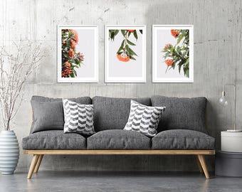 3 sets Australian wall art, gum tree flower photography, Prints
