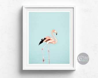 Flamingo Print, Flamingo Wall Art Decor, Printable Art, Bird Wall Art, Bird Printable, Wall Art, Wildlife Wall Art, Bird Decor, Exotic Bird