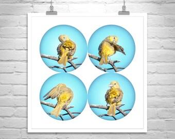 Yellow Bird Picture, Unique Art, Bird Photography, Bird Print, Bird Art, Tanager Bird, Gift for Bird Lovers, Birder Gift