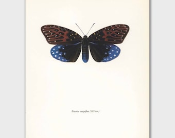 Butterfly Decor (Vintage Loft Wall Art, 1960s Mid Century Artist) --- Blue Velvet No. 90-2