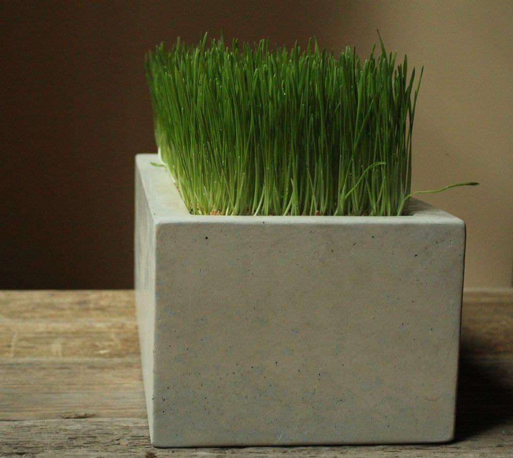 🔎zoom. concrete box planter