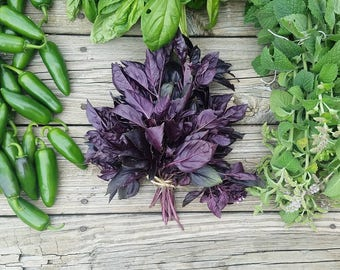 Organic Violet / Purple Basil Seeds, Herb Seeds, Heirloom Seeds - Non-GMO, Open Pollinated, Untreated (150 Seeds)