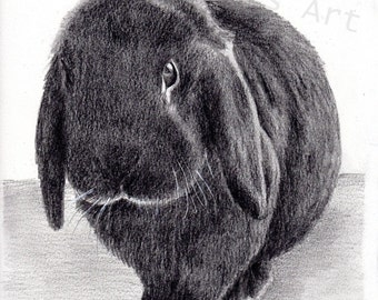 Custom bunny pet portrait, graphite pencil, 8x10