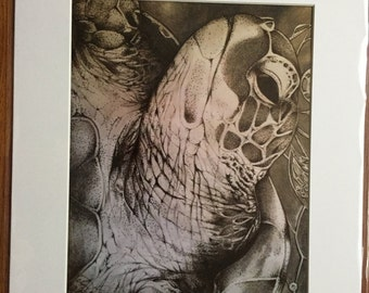 Sea Turtle art print in sable color