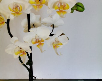 white orchid made of polymer clay